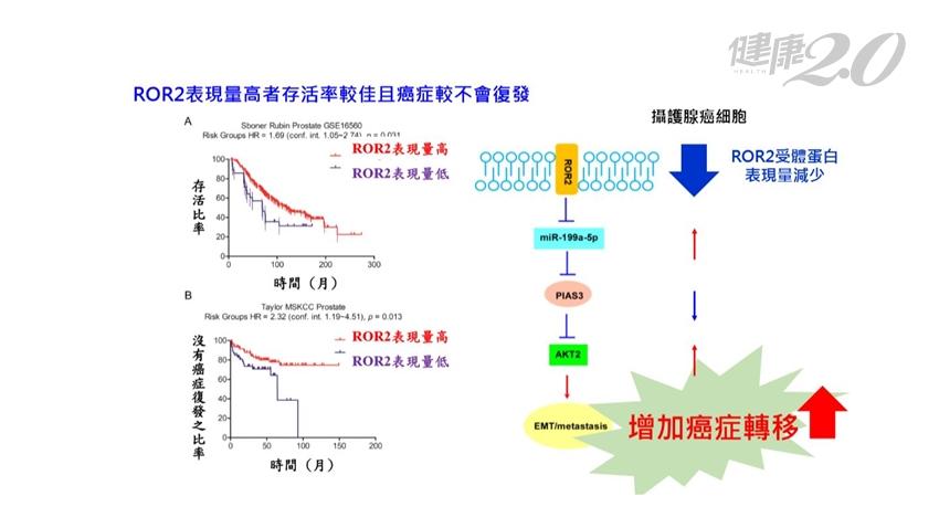 國衛院發現抗癌「鬼滅基因」!有效阻絕攝護腺癌轉移 蜂膠萃取物有幫助