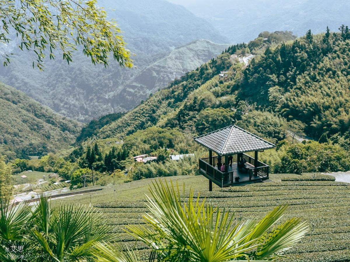 阿里山超Chill祕境!1公里親山步道可賞雲瀑、走竹林,還能拍最美茶園