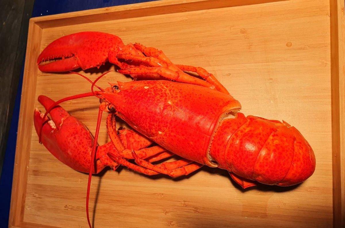 同字、同音都可以!法式餐廳推姓名有「佳、穎、淑、慧、鳳」,免費吃「波士頓龍蝦」料理