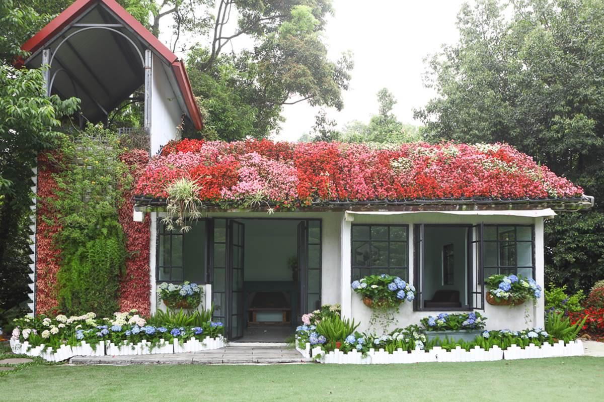 美到犯規!苗栗超繽紛繡球花園「毛小孩」也能來,打卡3D鏡中花、湖畔享玫瑰全餐