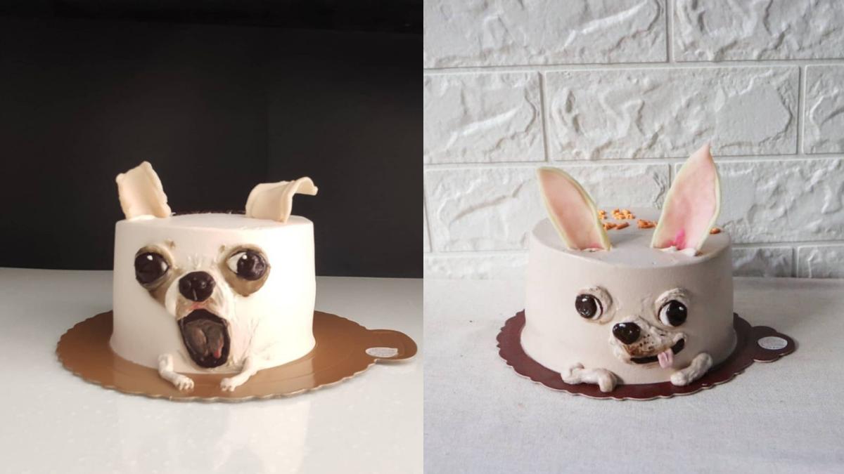 生日蛋糕就決定是你!「吉娃娃蛋糕」呆萌吐舌太Q、「電鍋蛋糕」可愛到捨不得吃