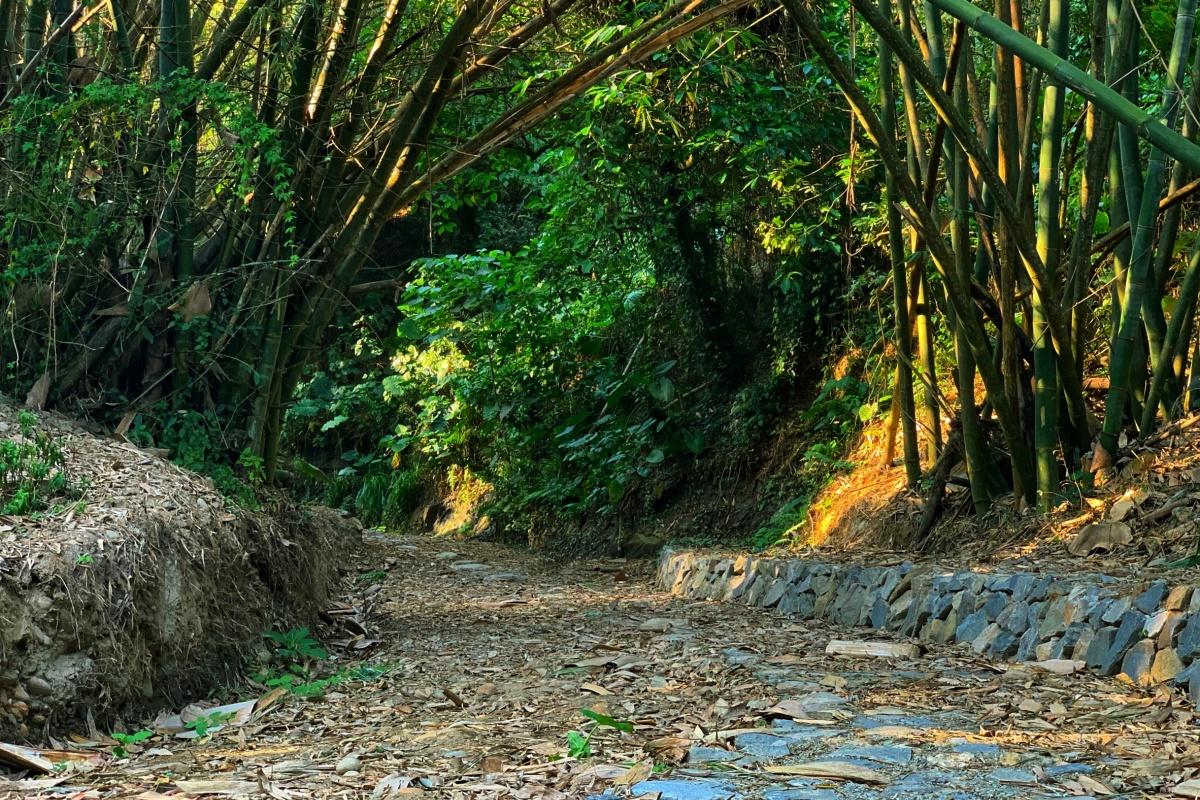 親子出遊先存好!彰化「石牌坑生態步道」豐富生態超吸睛,還可順遊八卦山、四面佛寺