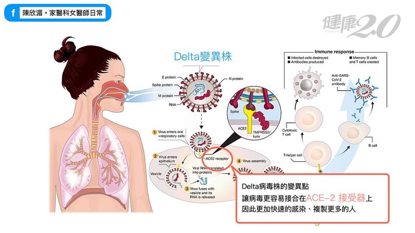 印度變種Delta病毒到底可怕在哪裡?1張圖讓你知道它的恐怖,能打疫苗的盡快打