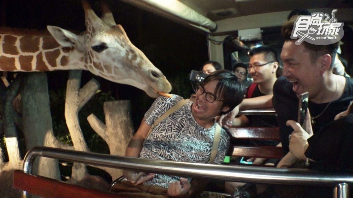 先收進旅行清單裡!泰國3大獨家玩法:海底漫步、夜遊動物園、泰式古裝寫真