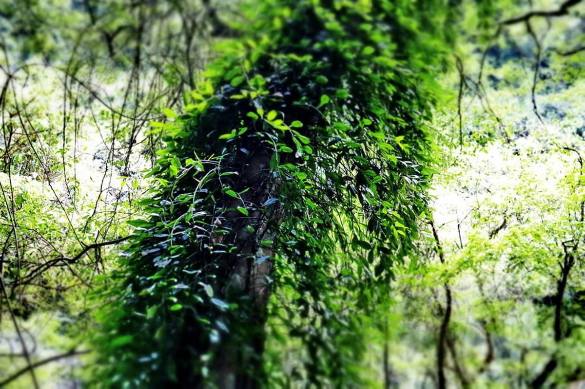 消暑祕境再+1!20分鐘「叢林步道」可賞瀑布、蕨類生態,還能走「輪胎小道」看美景