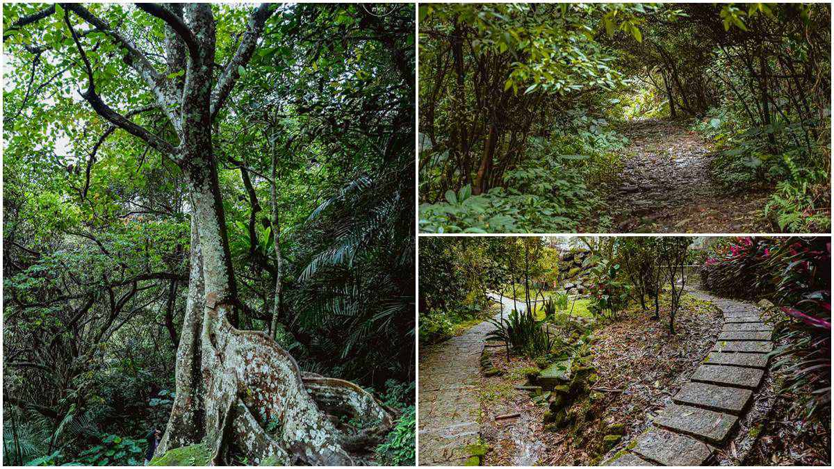 超好走祕境!2公里親水步道能賞巨型「百年大板根」,台版「龍貓森林隧道」IG必打卡
