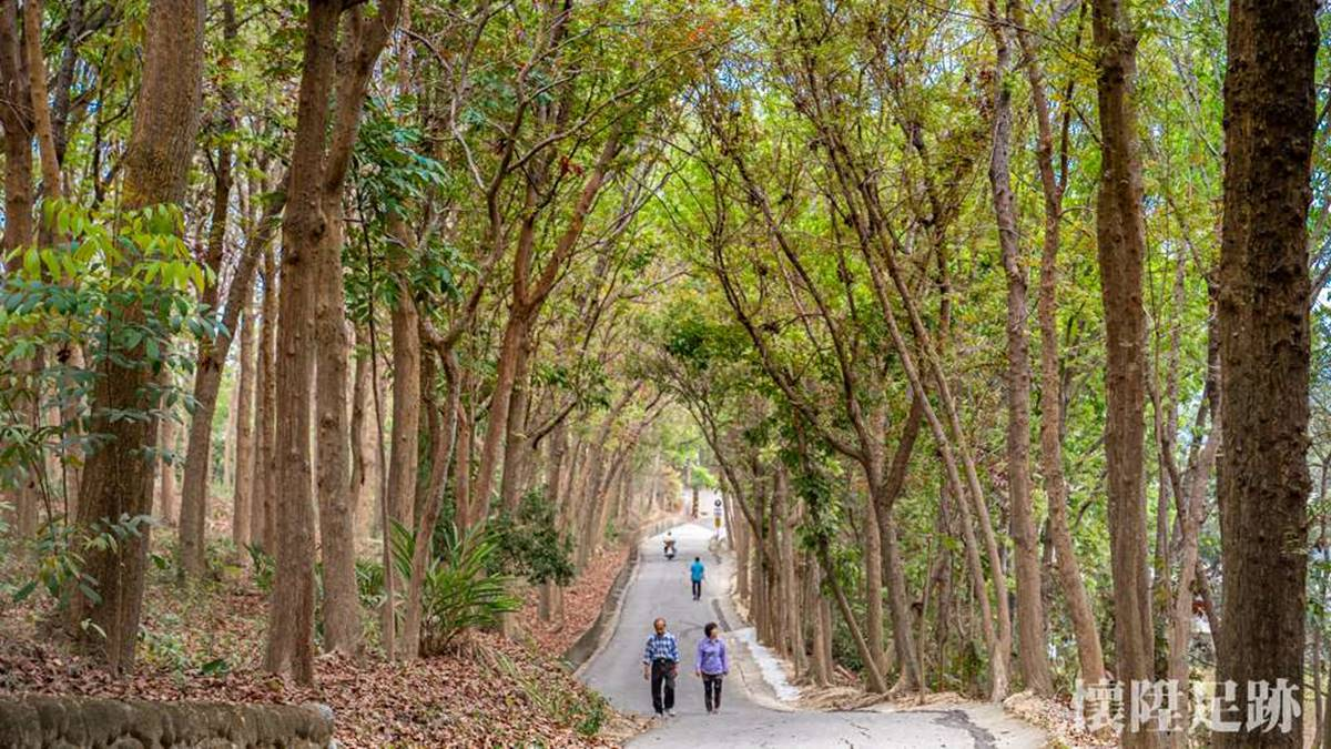 免上山遊森林!超好走「綠色隧道」賞百年巨型榕樹,還有鐵道迷必朝聖「火車祕境」
