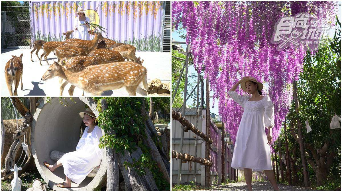 水水打卡囉!夢幻「梅花鹿園區」近距離餵食超萌小鹿,還能美拍紫藤花、芒果樹步道