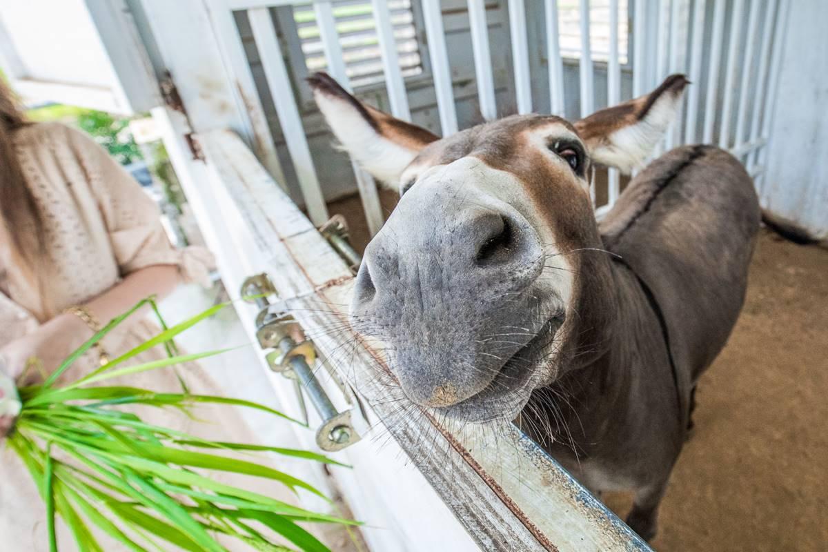 親子景點再+1!近距離餵食「史瑞克小驢」、超萌梅花鹿,還能打卡鄉村風農場