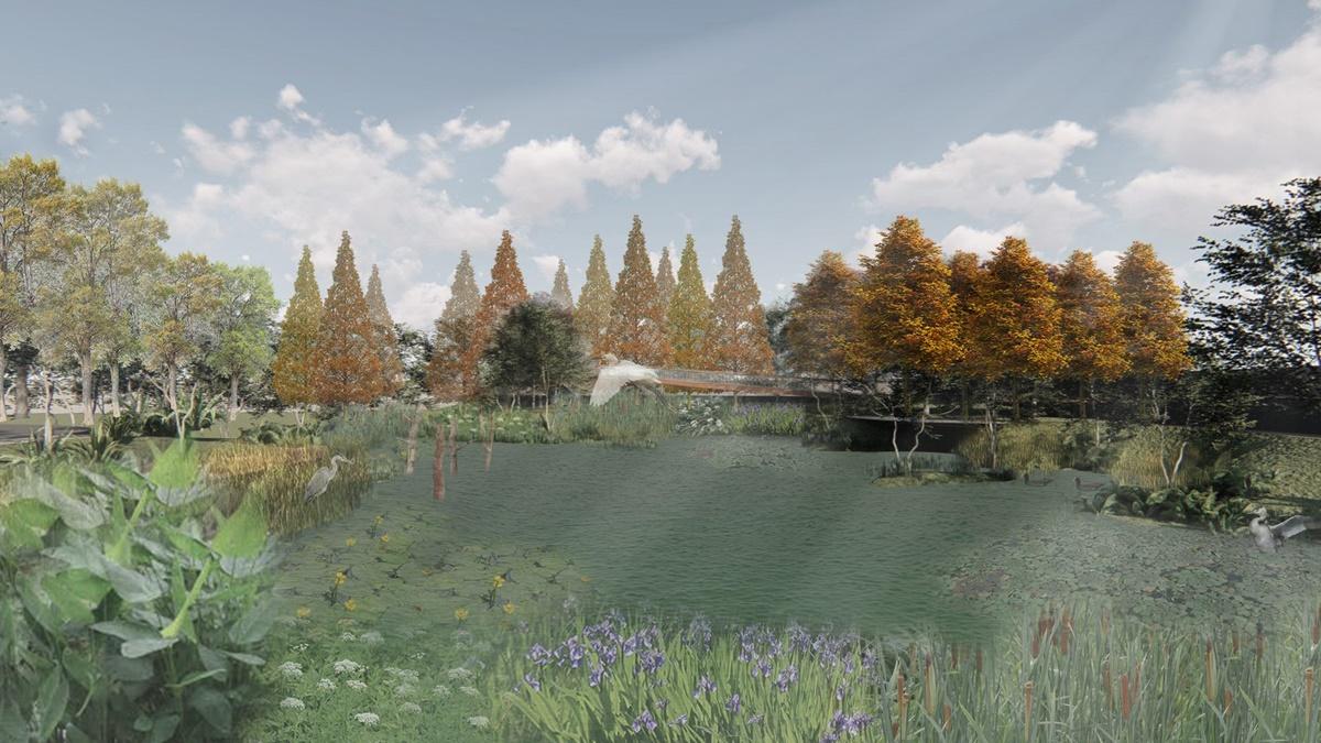 士林人也有「落羽松廊道」!2.2公頃「台北最新後花園」這時開,可賞夕陽、草地野餐