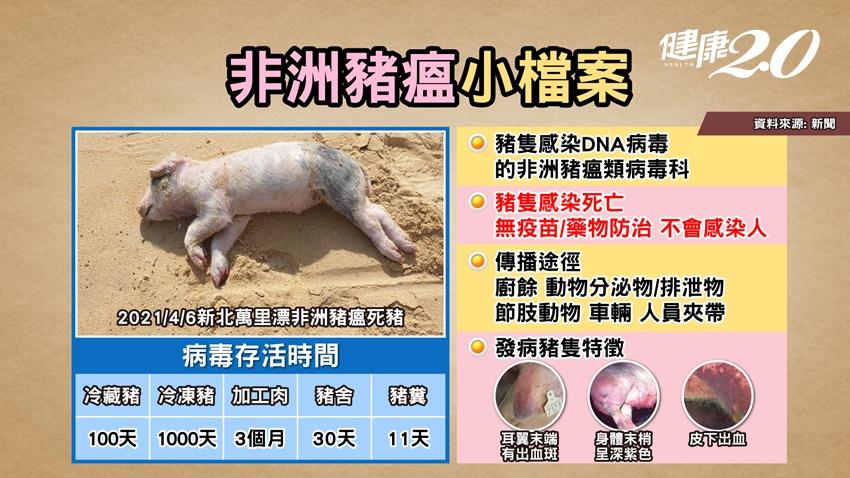 醫師警告染疫的豬肉可能有紫斑!主廚曝挑選健康豬肉3大祕訣