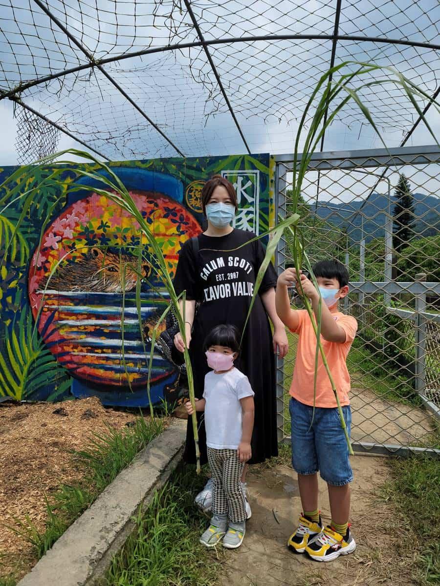 親子出遊首選!桃園生態農場餵食超萌「水豚君」,還有小孩最愛釣蝦區