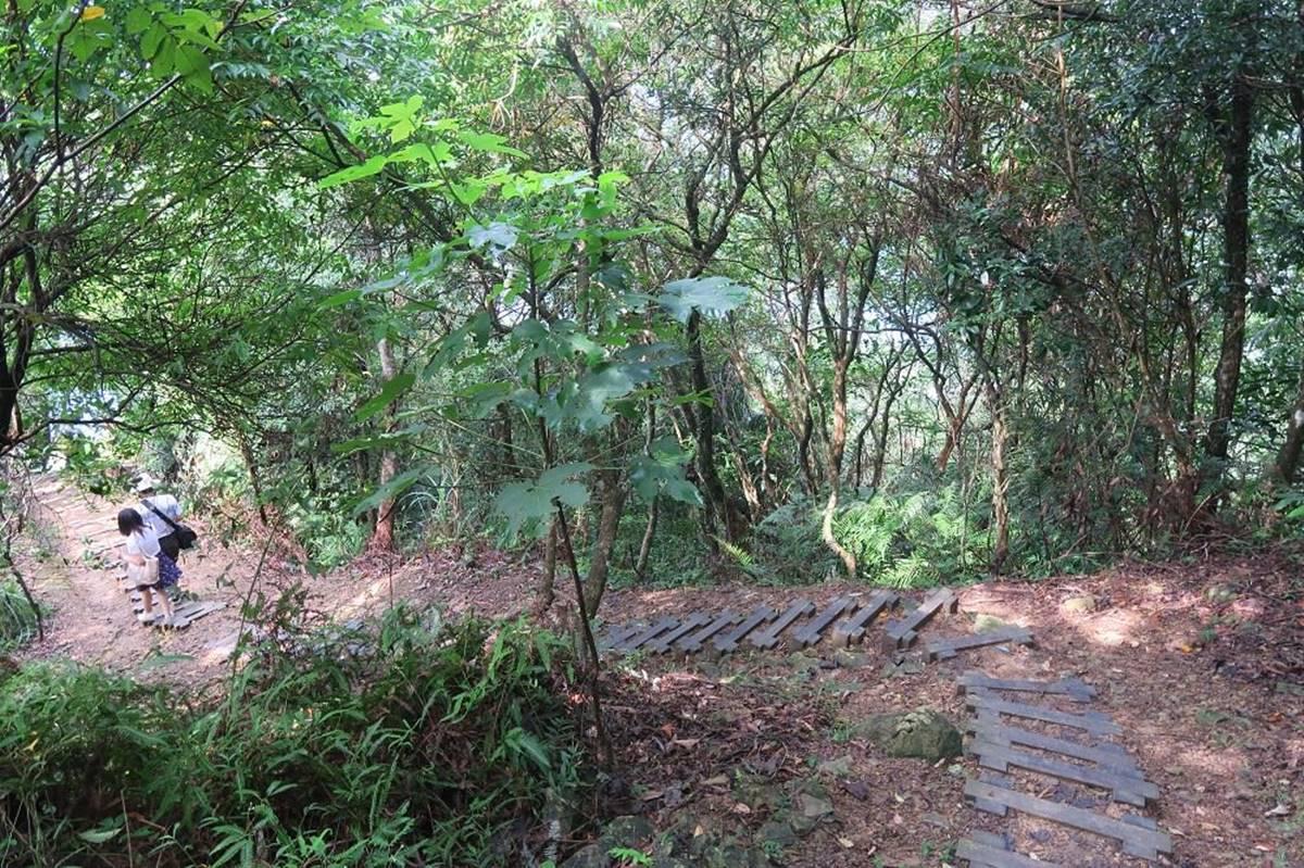 森林系水水必衝!石碇祕境1日6行程:打卡鱷魚島、美拍古道吊橋、陶藝DIY