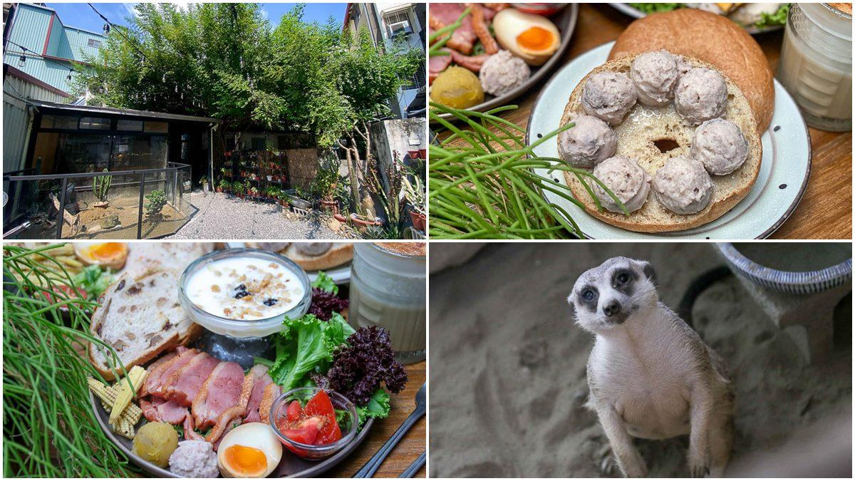 動物控快衝!台南老宅咖啡廳有「小狐獴」陪你吃飯,必點澎派「燻鴨胸拼盤」