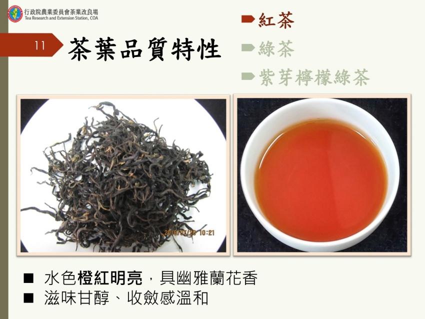 台灣茶改場研發紫色茶新品種 花青素高50倍,好喝好看又好心