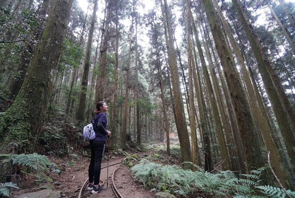 專車接駁超輕鬆!苗栗祕境登山步道賞「雪山聖稜線」,還能美拍森林鐵道