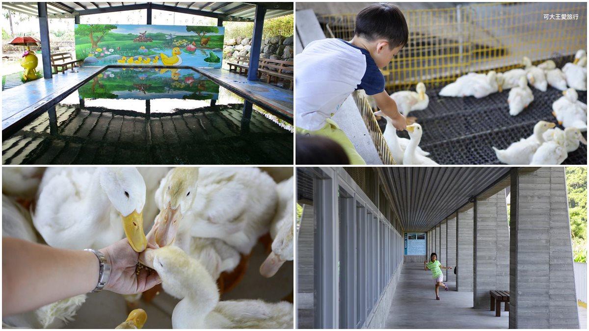 親子出遊必衝!礁溪五星級鴨舍體驗「鴨嘴按摩」,還能爽玩戲水池超清涼