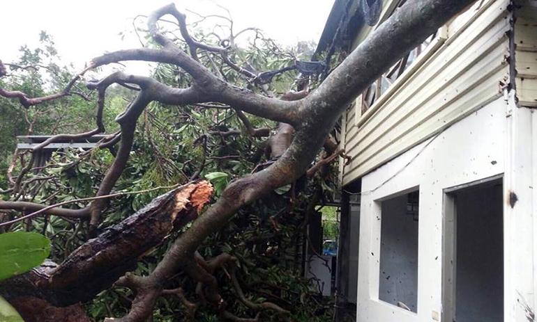 ▲圖/陳小姐提供/台東災情嚴重,金崙村有大樹直接壓在屋子上。 災民:台東災後如戰後 我們被遺棄了