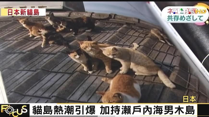 FOCUS/住民180貓咪超過200隻 島主人非人
