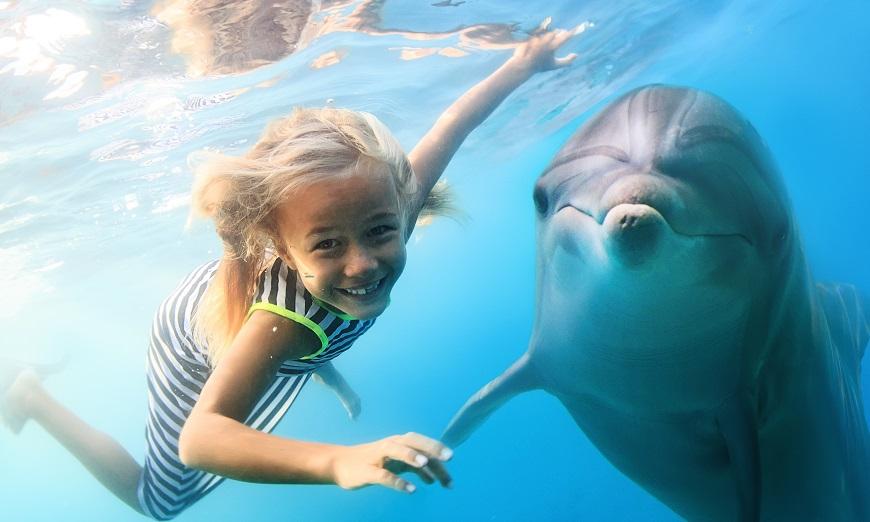面對同伴逝世,鯨豚一樣會感受到悲傷情緒。示意圖/TVBS 牠也會哀傷!跟人一樣 研究發現鯨豚會悼念死者