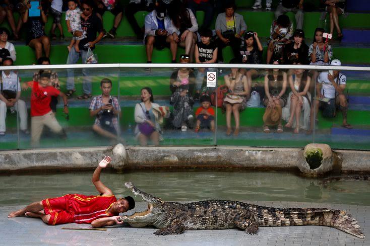 圖/達志影像路透社 FOCUS/泰國鱷魚養殖場 全球最大10萬隻