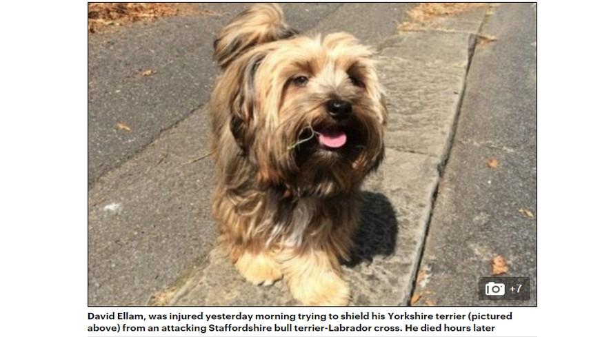英國西約克郡,一名52歲的男子David Ellam,為了保護愛犬免於受到鬥牛犬的攻擊,竟被鬥牛犬咬掉膝蓋,最後倒在血泊之中,因失血過多,送醫不治。 驚!為救愛犬 男遭鬥牛犬咬掉膝蓋慘死