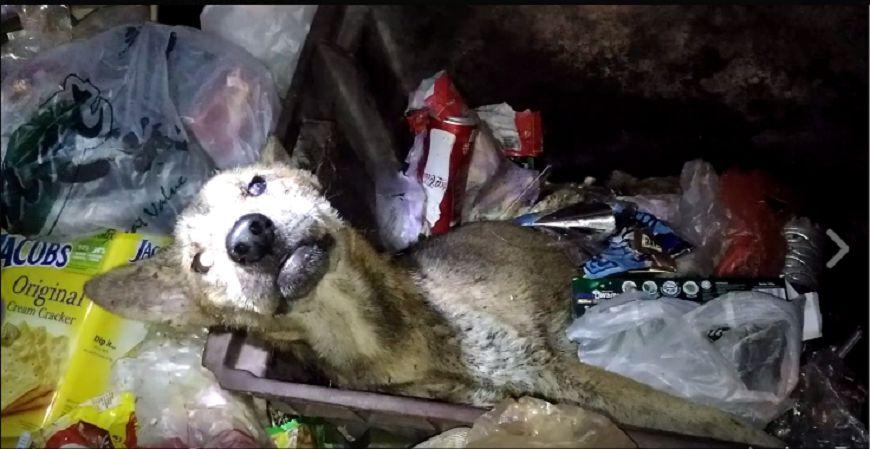 圖/擷取自影片 「我做錯什麼了?」 老狗遭棄垃圾桶心碎哀嚎