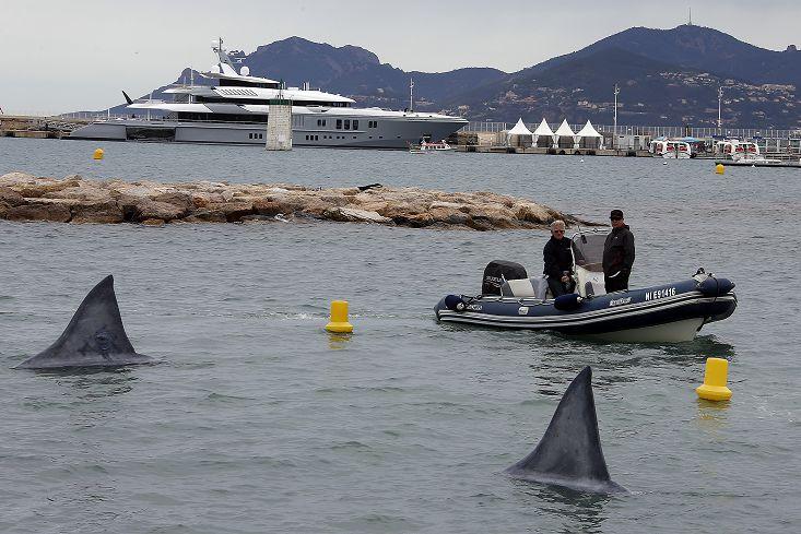 圖/達志影像路透社 1年減少1億條 3島國提議護鯊方案