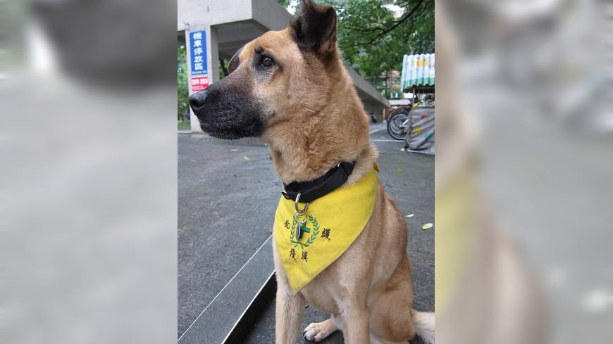 優漢是國北護第一代校犬。圖片來源/北護校犬志工隊臉書專頁 永遠記得你…保衛校園的毛孩 老校犬伴師生15年