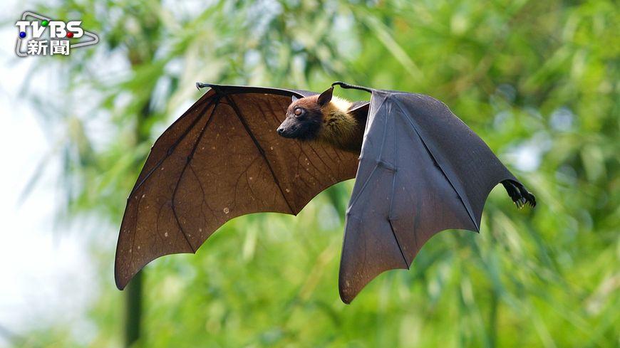 今(9)日疾病管制署從蝙蝠身上檢驗出全球首例的「新型麗沙病毒」,究竟新型麗沙病毒是什麼、遭受感染會有何後果、該怎麼預防,聽聽疾管署專家怎麼說! 【新麗沙病毒侵台】慎防蝙蝠 貓狗快接種疫苗