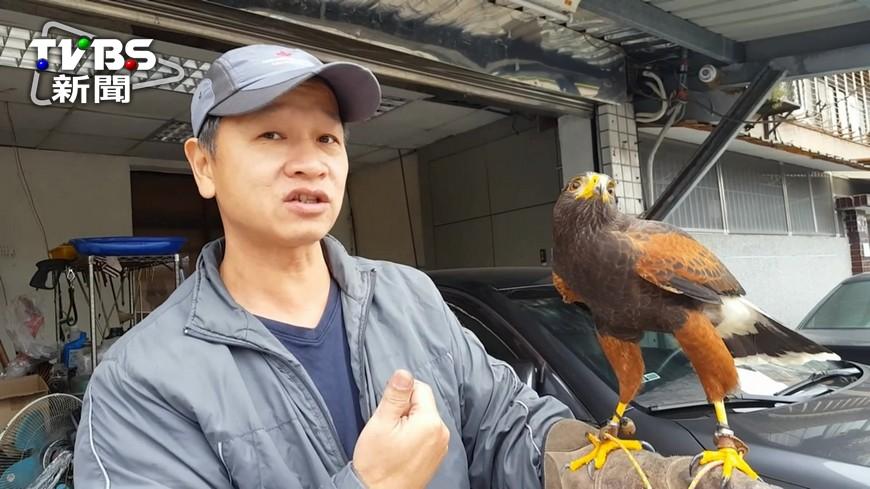 圖/TVBS 烏鴉流浪街頭?原來是牠自開鳥籠飛出