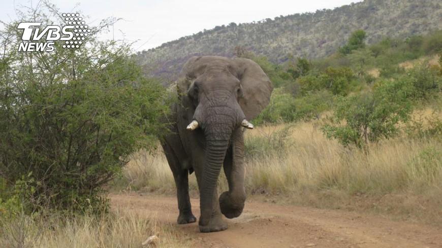 圖/中央社 動物無國界 非洲大林坡坡跨國公園