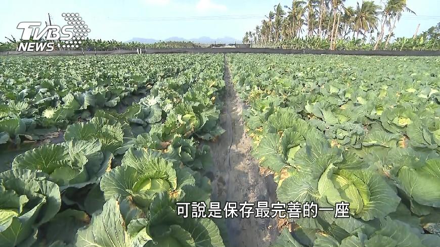 圖/TVBS 「有機」始祖之一 旗南分場28年研究沃土