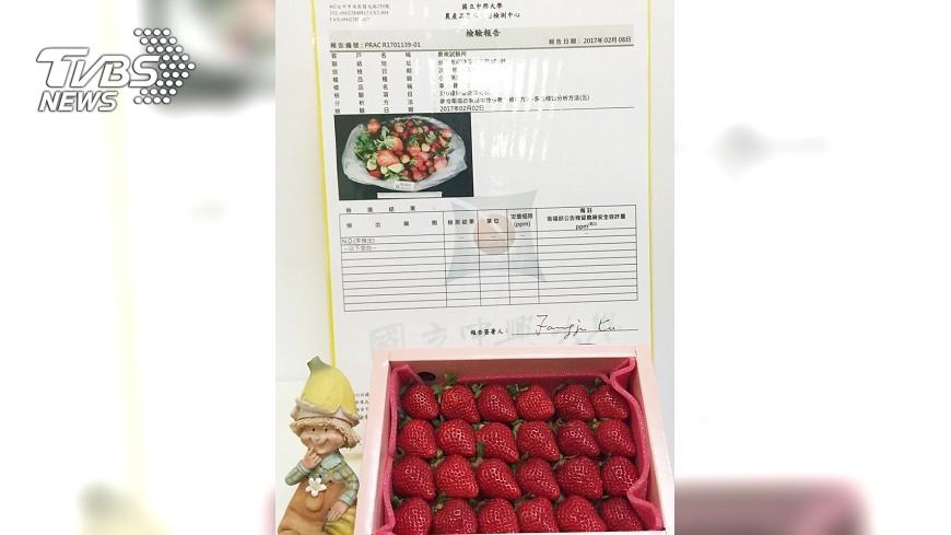 圖/中央社 不用農藥!草莓更優質 資材還省3成6