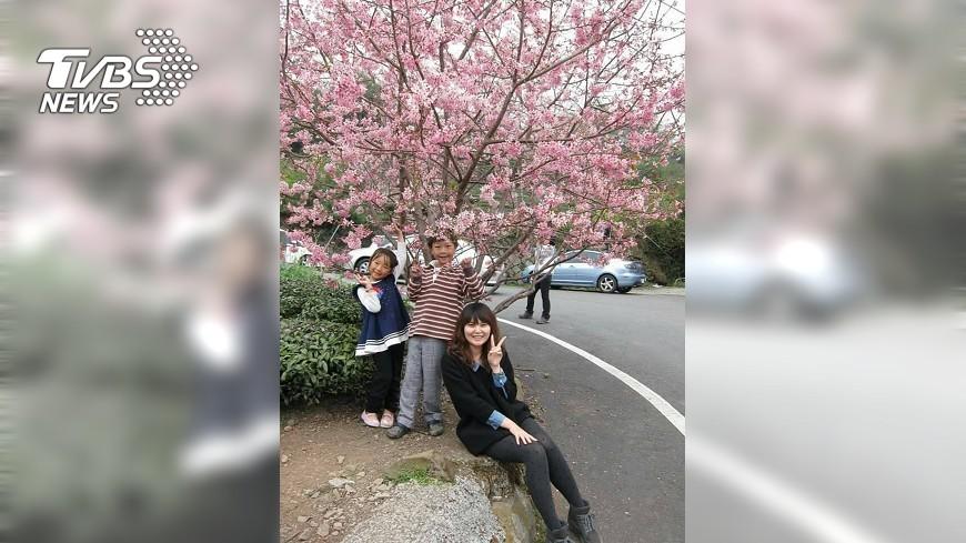 圖/中央社 跟著櫻花旅行 春遊石棹18日起登場
