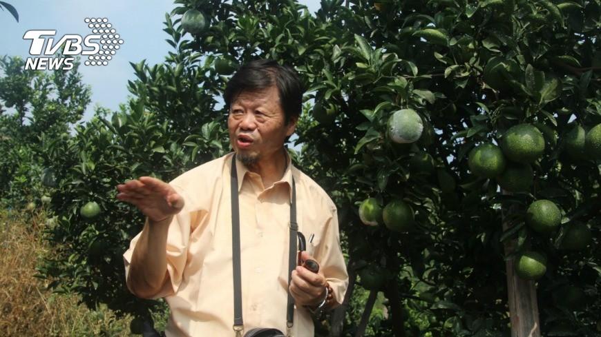 圖/中央社 蔡東纂推廣柑橘栽培逾30年 經驗編成書
