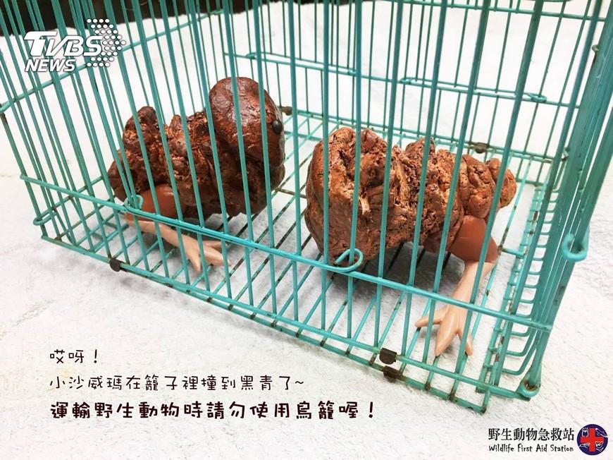 圖/野生動物急救站授權提供,下同 撿到「沙威瑪寶寶」怎辦?動物急救站公開神秘生物