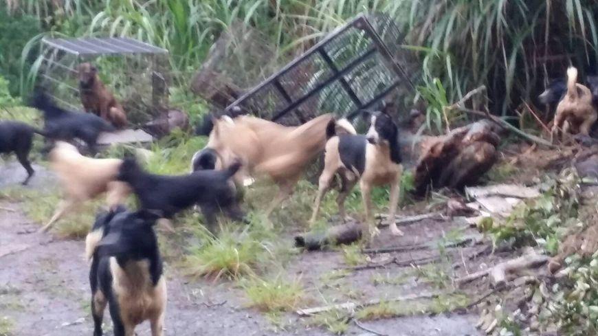 圖/新北市動保處 嫌12萬棄養費太貴!他載50隻狗整車丟草叢放生