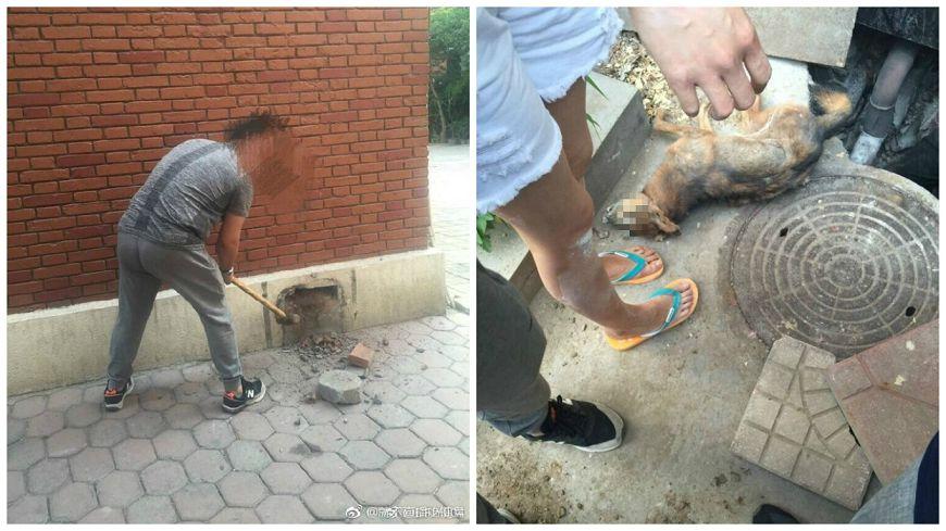 圖/取自大陸微博,下同。 殘忍!校方用水泥封死出口 學生敲開…拖出校犬遺體