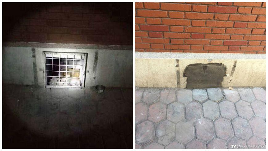 校內的流浪狗常棲身在地下室,學生甚至會放飼料在出口處,不料卻被校方用水泥封死。