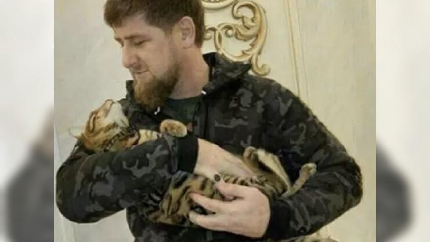 愛貓暖男卻一心「滅同」 車臣總統形象兩極