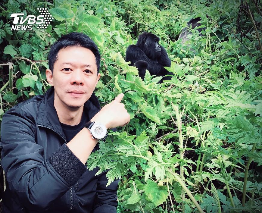 圖/TVBS 國際特派員林宏宜學猩猩語 近距離觀察野生大猩猩