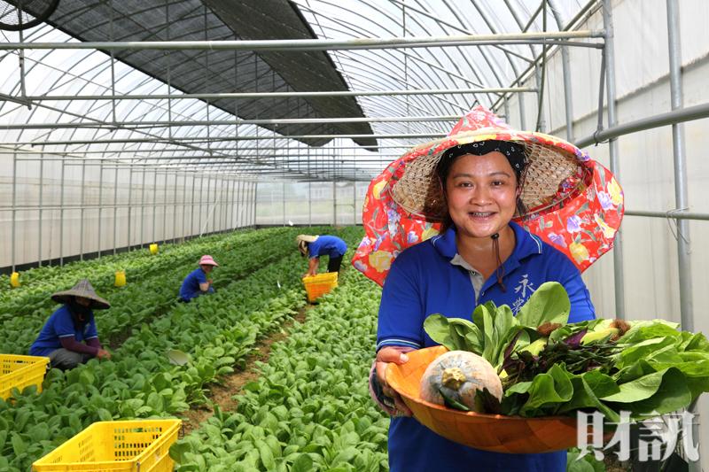 圖/財訊 【財訊】有機農業企業化 正在一步步改變你的餐桌