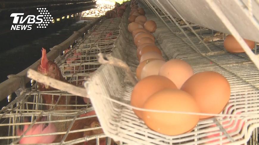 圖/TVBS 毒雞蛋風波延燒 農委會召開跨部記者會說明