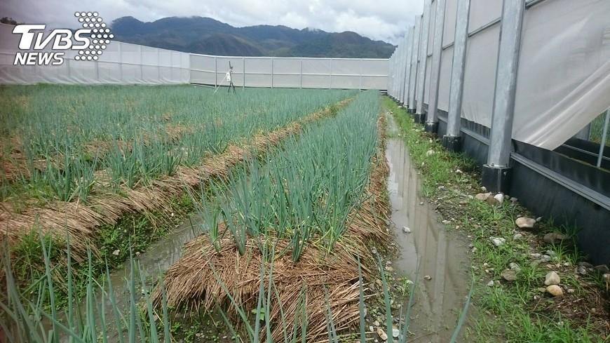 圖/中央社 提升農業抗災力 溫網室築起一畝夢田
