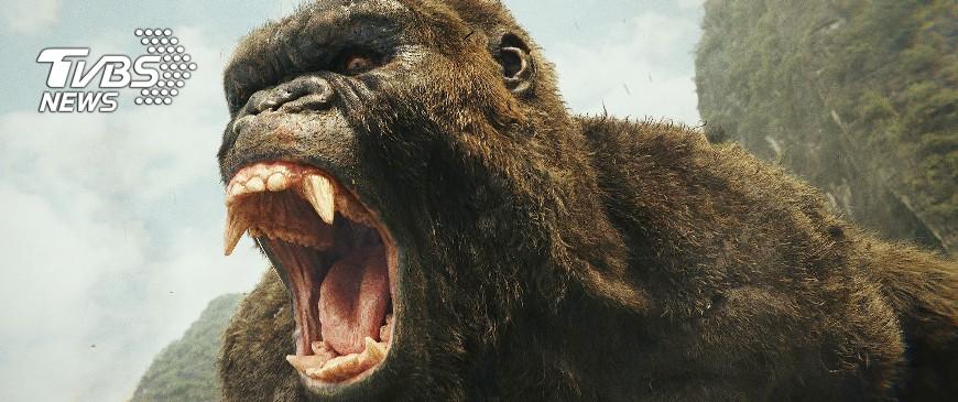 圖/達志影像TPG、美聯社 網友熱議十大怪獸電影,金剛竟輸給這隻巨獸?!