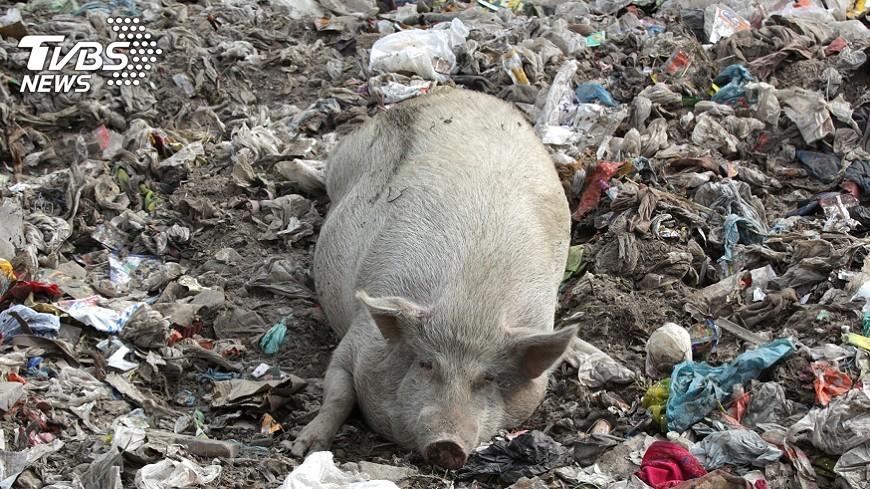 圖/達志影像路透社 疑突變  印度今年豬流感在雨季前爆發