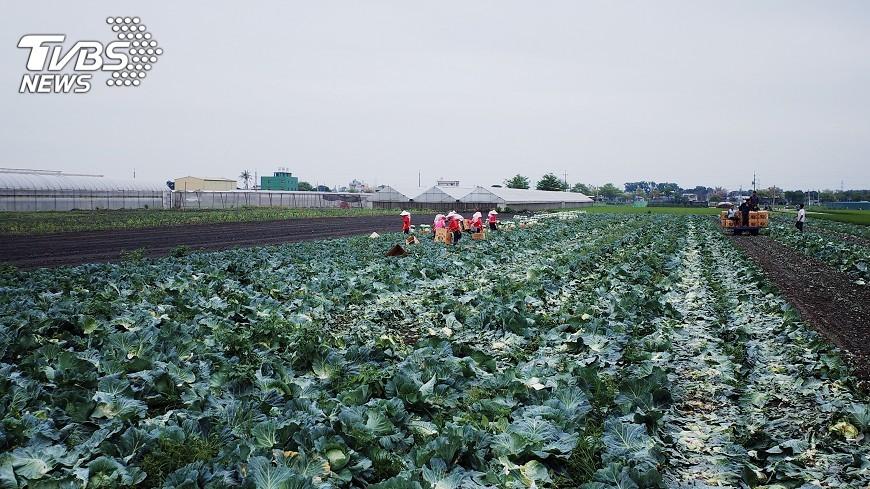 圖/中央社 政院通過有機農業專法 濫用有機可開罰