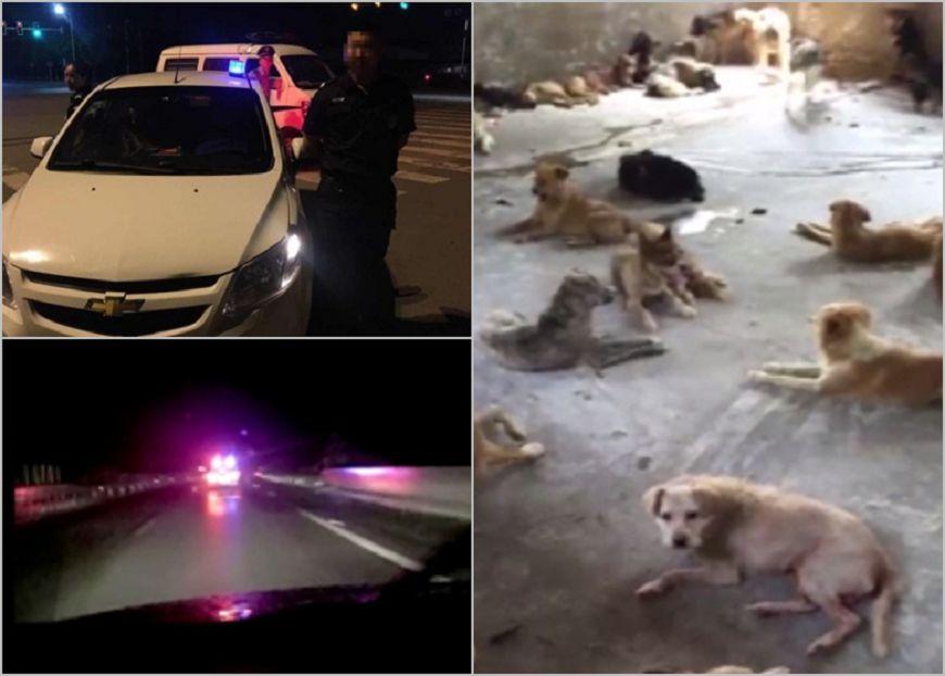 圖/取自大陸微博,下同。 怕108隻狗狗變食物! 他「冒充」特警攔截運犬車