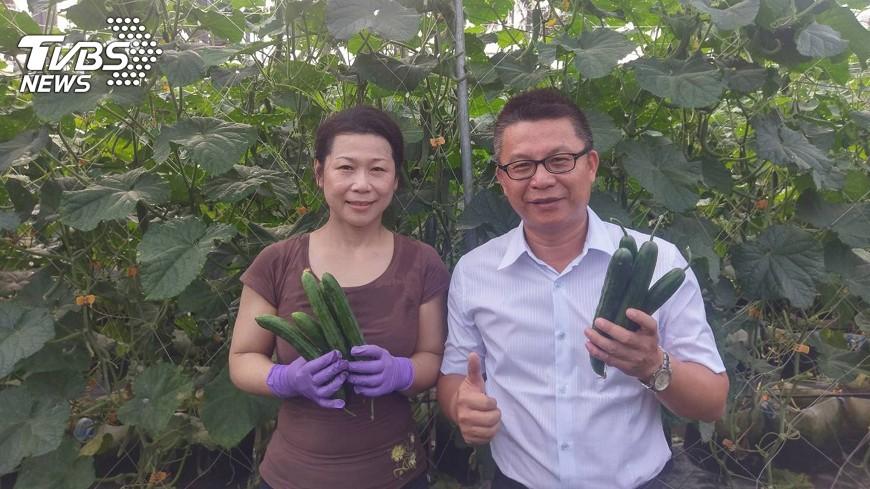 圖/中央社 小黃瓜改種在花盆 產量增加2倍